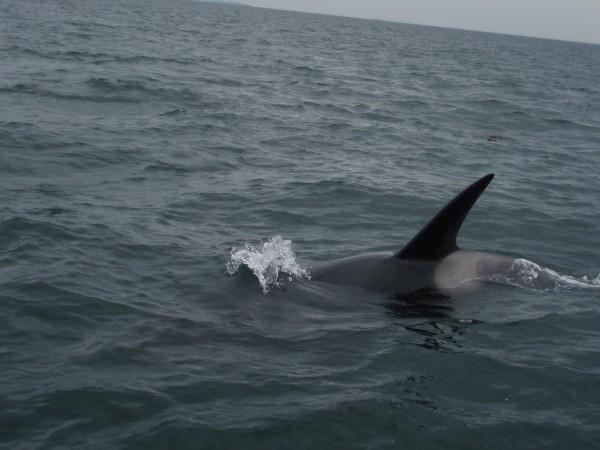 19-transient-orcas-2