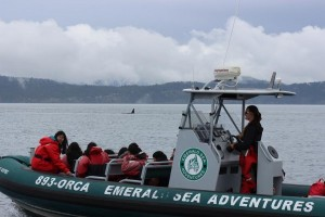 Emerald Sea Adventures tour group out whale watching