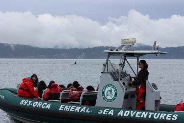 27-transient-orcas-1