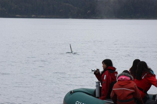 27-transient-orcas-5