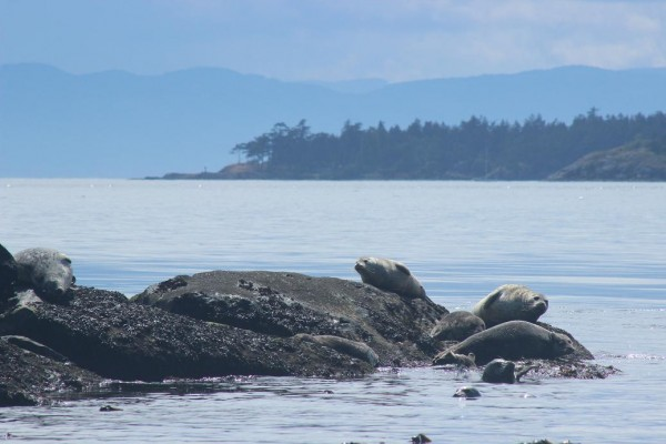 whales-everywhere-3
