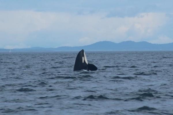 whales-everywhere-4