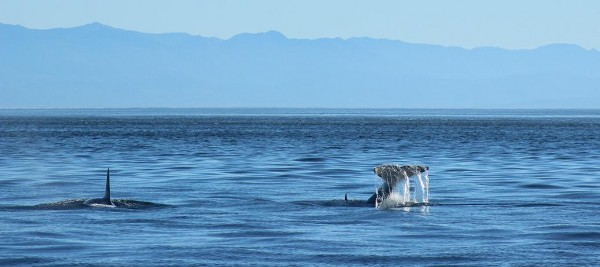 whales-everywhere-5